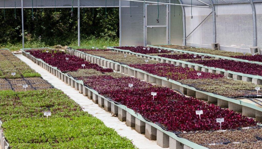 Allee Bleue microherbs